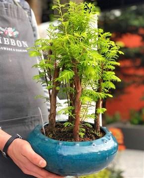 bonzai, bonsai, farklı bonzai türleri