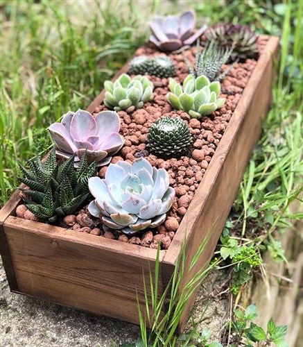 Wooden Deluxe Succulent Forest