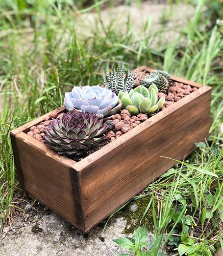 Wooden Succulent Forest