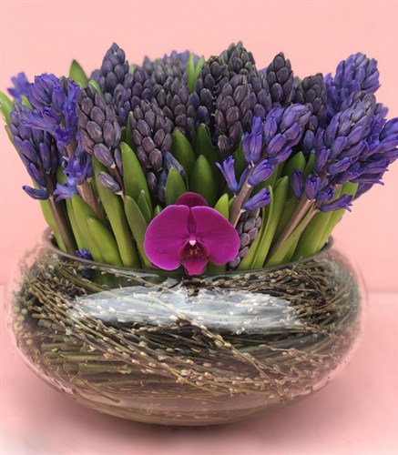 Purple Hyacinth Garden Deluxe