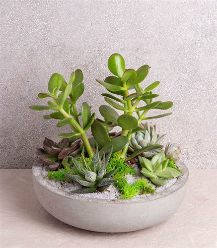 Succulent Jungle Round