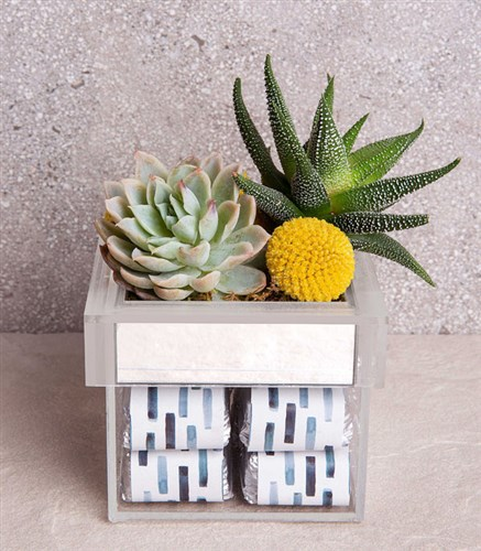 Succulent Luxe Box