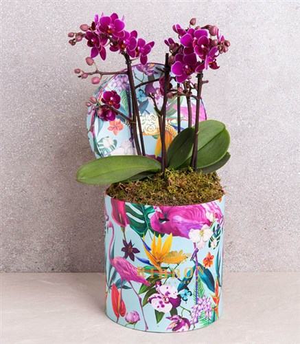 Orchids in Tropical Box
