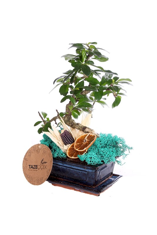 Tropical Bonsai (Bonzai)