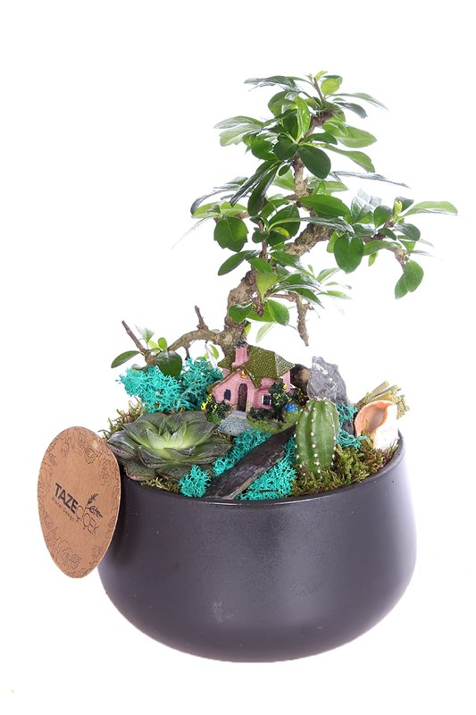 Best Bonsai Teraryum