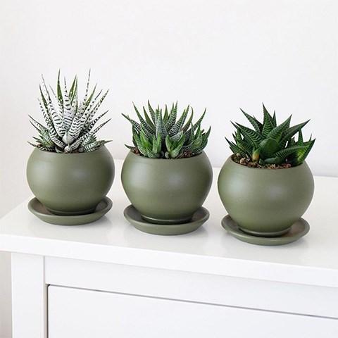 saksılı iç mekan bitkileri