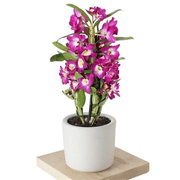 beyaz saksı içerisinde eşsiz güzellikteki pembe orkide